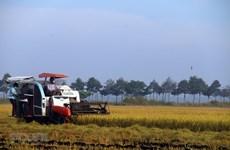 Vietnam por convertirse en suministrador global responsable de alimentos