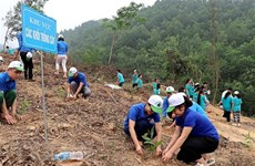 Provincia vietnamita de Ben Tre plantará 10 millones de árboles