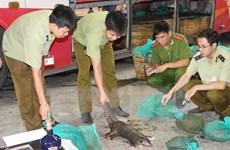 Persiste complejidad del tráfico de vida silvestre en Vietnam