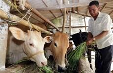 Vietnam avanza en reducción de la pobreza multidimensional