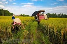 Banco Mundial dispuesto a apoyar a proyectos de desarrollo agrícola de Vietnam