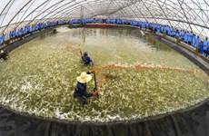 Vietnam y Australia fortalecen comercio de productos agrícolas