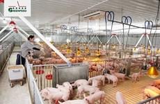 CFI apoya la ganadería sostenible en Vietnam