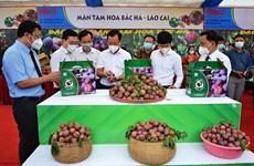 Vietnam por promover progreso agrícola en medio de COVID-19