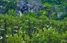 Vietnam promueve cooperación con Fondo Mundial para la Naturaleza