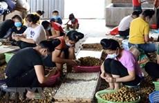 ASEAN potencia papel de mujeres en el sector agrícola