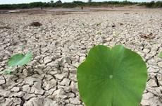 Cambio climático afecta a gran parte de la población de Camboya