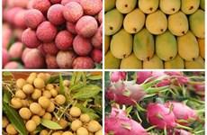 Robustecen Vietnam y China cooperación en agricultura y consumo de frutas