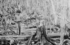 60 años de desastre del Agente Naranja en Vietnam: la guerra catastrófica