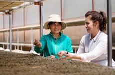 Empresa vietnamita de café busca conectar a proveedores agropecuarios