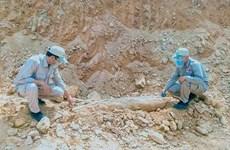 Desactivan una gran bomba en zona residencial en provincia vietnamita de Quang Tri