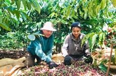 Vietnam promueve exportación de productos agrícolas y acuáticos a Argelia y Senegal