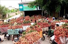 Vietnam y China trabajan por aliviar barreras en comercio agropecuario