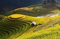 Recorren los arrozales patrimoniales de Hoang Su Phi a través de la pantalla