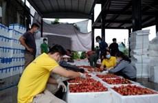 Vietnam planea conectar a cinco millones de agricultores con plataformas de comercio electrónico