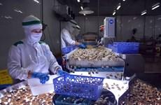 Crecen en exportaciones acuícolas de Vietnam a pesar de los impactos del COVID-19