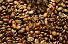Aumenta precio de exportación de café arábica de Vietnam