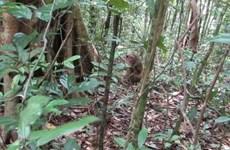 Provincia vietnamita libera especies salvajes en su hábitat natural