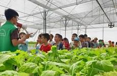 Hanoi se esmera en desarrollar turismo agrícola