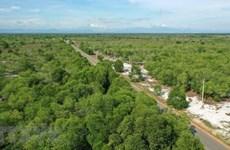 Vietnam y Finlandia fortalecen cooperación en desarrollo de cooperativas forestales