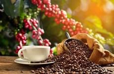 Turismo cafetero brinda nuevas oportunidades para la industria sin humo vietnamita
