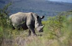 Destacan esfuerzo de Vietnam en lucha contra el comercio ilegal de cuernos de rinoceronte