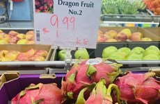Pitahaya vietnamita goza de alta valoración en Australia