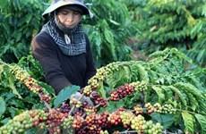 Vietnam busca ampliar exportaciones agropecuarias a la India y la subregión del Mekong