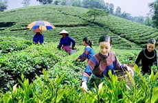 Fortalecen coordinación para garantizar medios de vida de minorías étnicas en Vietnam