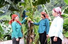 Promueven en Vietnam implementación de políticas de reducción sostenible de la pobreza