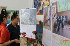 Ganadería de Vietnam desde la perspectiva de artistas y agricultores