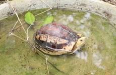 Visitan hogar de especies raras de tortugas en el parque vietnamita de Cuc Phuong