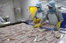 Exportaciones de pangasius de Vietnam superan mil millones de dólares