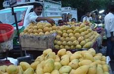 Corea del Sur aumenta importaciones de mango vietnamita