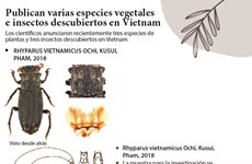 [Infografía] Publican varias especies vegetales e insectos descubiertos en Vietnam