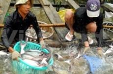 Tra y Basa, primeros productos acuáticos exportables