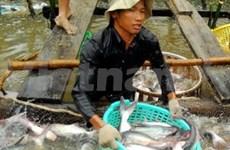 Levantan impuestos antidumping a pescados vietnamitas