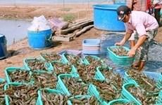 Viet Nam busca aumentar exportaciones acuáticas