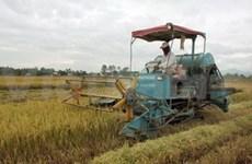 Conferencia internacional de arroz en Viet Nam