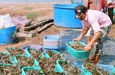 Crecen exportaciones de productos acuáticos de Viet Nam