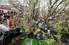 Efectúan festival japonés de Genki en Ha Noi