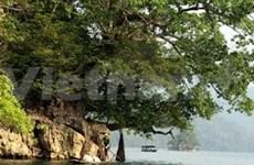 Viet Nam celebra Día Mundial de Medio Ambiente