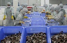 Registran exportaciones de camarones mayor crecimiento