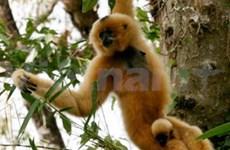 Parque nacional recibe animales en riesgo de extinción
