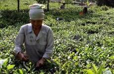 Ceremonia semanal honra cultura milenaria del té