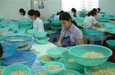 Vietnam aspira a incrementar ventas de anacardo