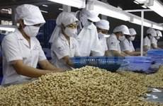 Exportación de anacardo vietnamita mantendrá estable