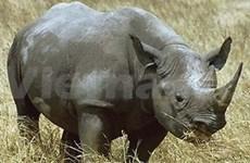 Campaña contra comercio de cuernos de rinoceronte en Vietnam