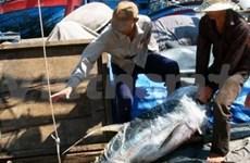 Quintuplica exportación atunera vietnamita a Portugal