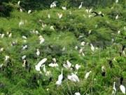 Parque Tram Chim da bienvenida a aves migrantes